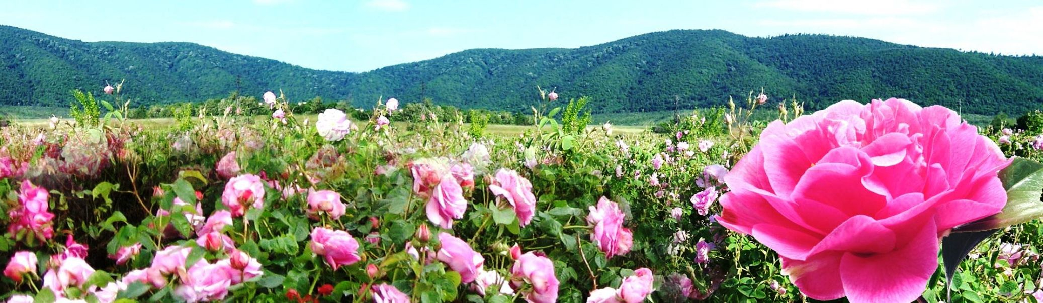 Visit of the Rose Festival 2020 in Kazanlak and discovery of the Valley of the Thracian Kings - Travel To Bulgaria